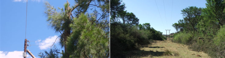 vegetation-project-header1.jpg